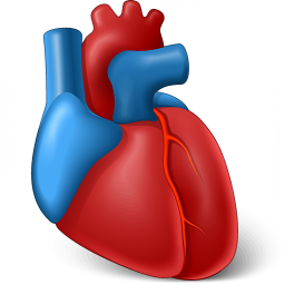 Heart Organ Icon 256x256